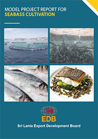 Production of Seabass Caltivation